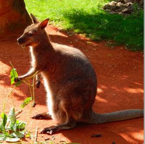Thanks kangaroo
