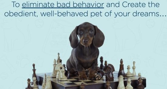 brain training affiliate program for dogs