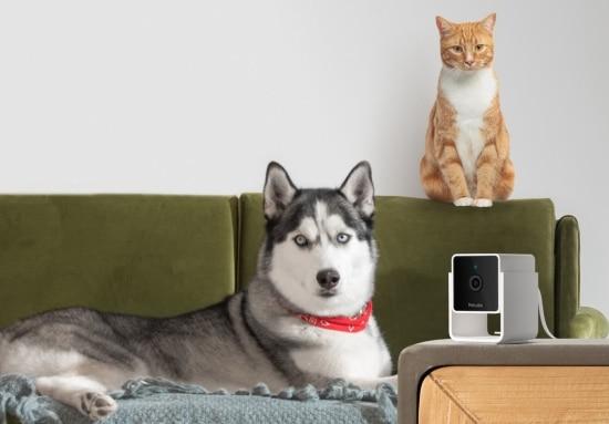 Petcube dog affiliate program